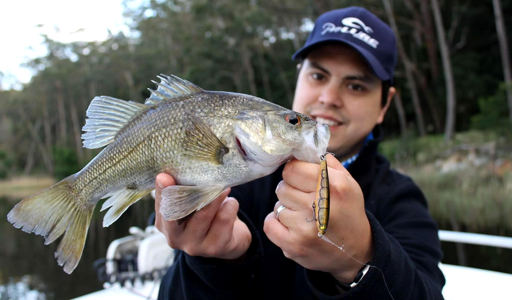 BASS AND ESTUARY PERCH IN TIDAL RIVERS